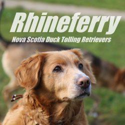 rhineferry